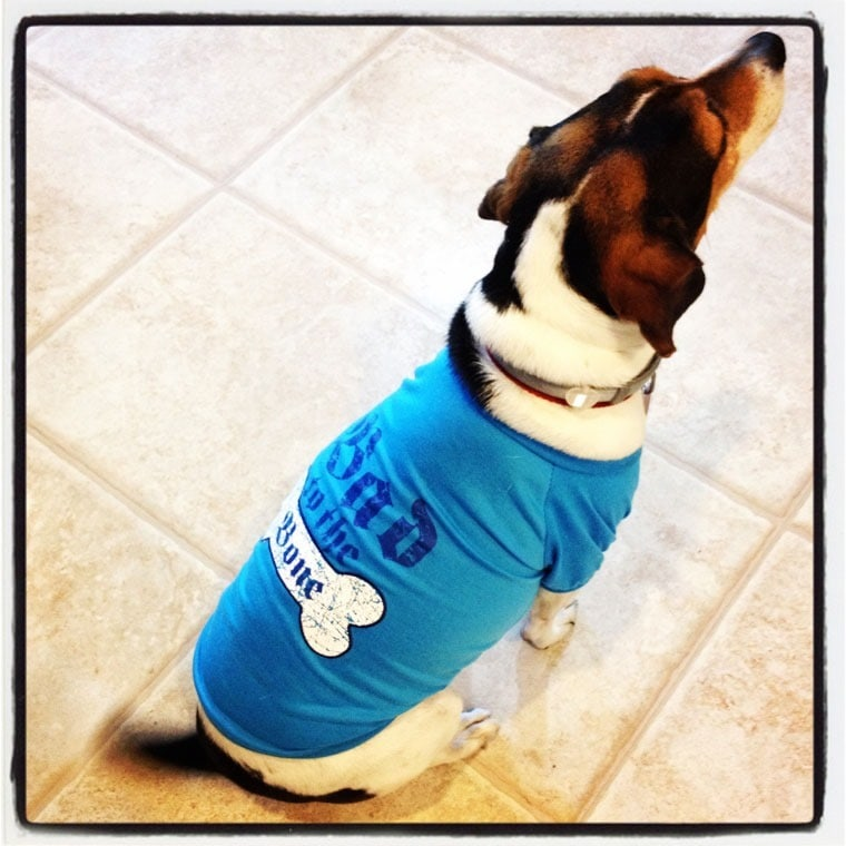 Swiffer makes cleaning up after dogs easy! Learn how at This Mama Cooks! On a Diet - thismamacooks.com #SwifferEffect