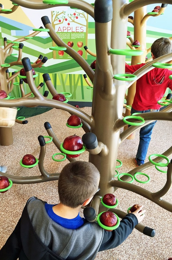Kids can gather apples in the farm yard at the Scott Family Amuzeum. Just one of the fun things to do in Northwest Arkansas with kids! To get more Bentonville, Arkansas family vacation travel tips visit This Mama Cooks! On a Diet.