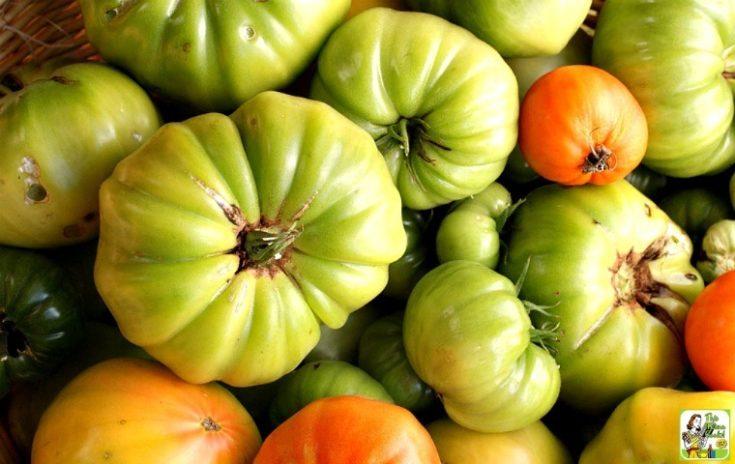 Green Tomato Ketchup Recipe.