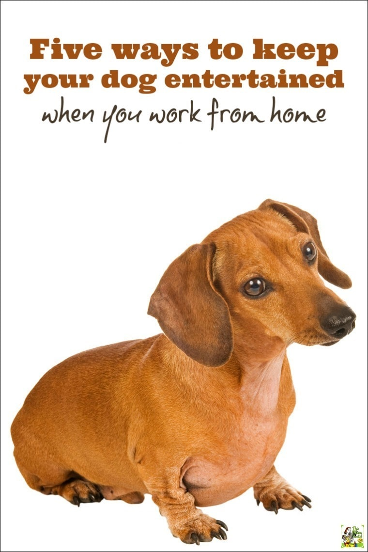 Improve Dog S Breath